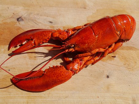 Whole cooked Lobster